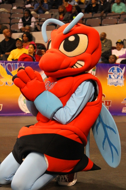 Delaware State Hornet mascot is on his knees chee...