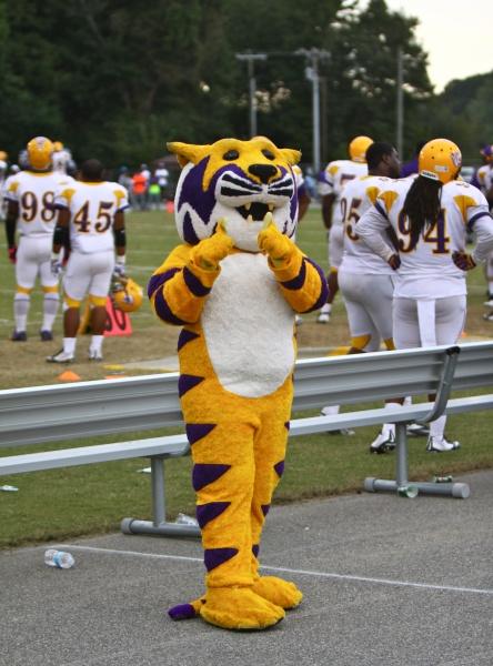 Benedict Tiger mascot at Down East Viking Footbal...